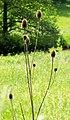 Nature Around Lupburg (157245535).jpeg