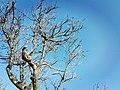 Nature for blinds 14.jpg