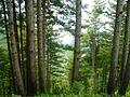 Nature of Trees.jpg