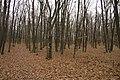 Nature reserve Šance in autumn 2012 (29).JPG