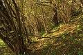 Nature reserve Dobrockovske hadce in autumn 2011 (37).JPG