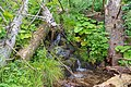 Naturschutzgebiet Feldberg (Black Forest) - Alpiner Steig am Feldberg - Bild 017.jpg