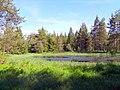 Naturschutzgebiet Hahnenfilz - panoramio.jpg