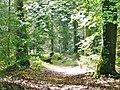 Naturschutzgebiet Hesel-, Brand- und Kohlmisse - panoramio (5).jpg