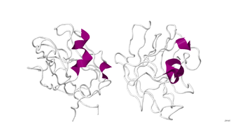 Neuropilin - Crystallographic structure of the dimeric B1 domain of human neuropilin 1.