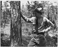 Newberry County, South Carolina. Tree blazed and marked for cutting within the Sumter National Fore . . . - NARA - 522754.tif