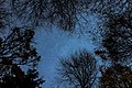 Night Sky (Ipernity-47666372).jpg