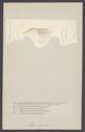 Nika edulis - - Print - Iconographia Zoologica - Special Collections University of Amsterdam - UBAINV0274 006 02 0037.tif
