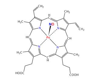 Nitroso - Nitrosyl-heme