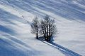 Një ditë dimri në Bajgorë.jpg