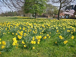 English: Norwood Green in spring. These lovely...