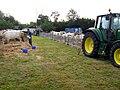 Nouziers fête agricole 2008 (bovins) 1.jpg