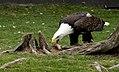 Oaklawn Farm Zoo, May 16 2009 (3539712530).jpg