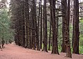 Ocotal forest 202006p2.jpg