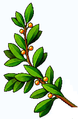 Olivaág (,heraldika,).PNG