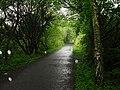On the Mawddach Trail - geograph.org.uk - 1310512.jpg