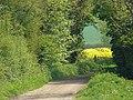 On the Trent Valley Way near Shelford - geograph.org.uk - 1056171.jpg