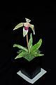Orchid potplant cake (8423924894).jpg