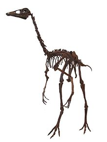 OrnithomimusROM white background.JPG