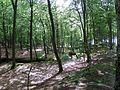 Orzechowo 2016-07-07 las bukowy i rzeczka Orzechowka.jpg