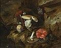 Otto Marseus van Schrieck - Bosstilleven met champignons, vlinders en een slang - II.jpg
