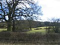 Oversley Wood - geograph.org.uk - 128744.jpg