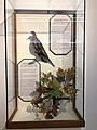 Pacific Grove Museum of Natural History - Stierch - 2018 03.jpg