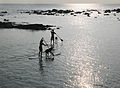 Paddling surfboards in Kona.jpg
