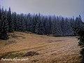 Padure de brazi - panoramio.jpg