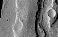 PadusVallis Close-up.JPG