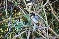 Pair of birds in Keoladeo Ghana National Park 2.jpg