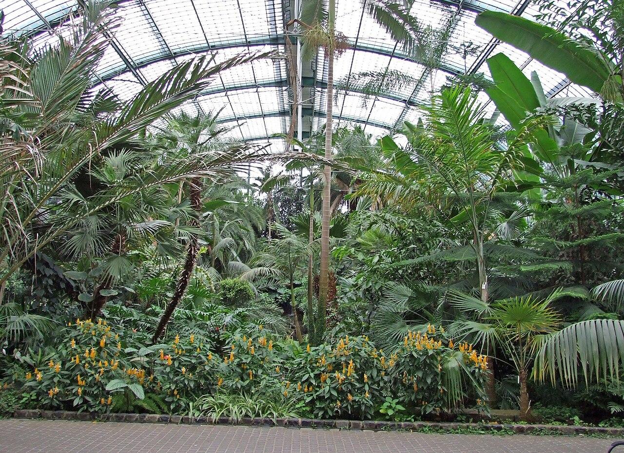 Berühmt Datei:Palmengarten-ffm-palmenhaus-001.jpg – Wikipedia @IN_72