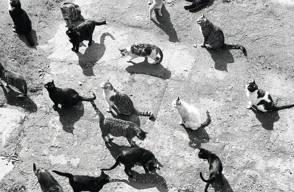 Paolo Monti - Servizio fotografico (Roma, 1969) - BEIC 6353760