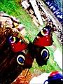 Papillon coloré.jpg