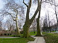 Parc de Bercy en hiver.JPG