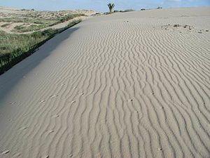 Ashdod Sand Dune - Image: Park Holot Sand