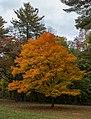 Parque Estatal Brown County, Indiana, Estados Unidos, 2012-10-14, DD 12.jpg