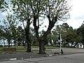 Parque Roosevelt.JPG