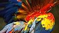 Parrot in Bloom (7371690214).jpg