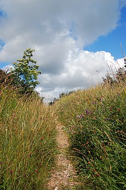 Path Around Fort Widley, Portsmouth (2638251469)