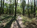 Path in the Hambach forest 03.jpg