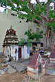 Peepal tree and shrine, Mysore.jpg