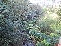 Pequeno córrego com mata nativa preservada na rodovia Paraíso-Monte Azul Paulista - panoramio.jpg