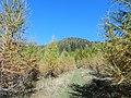 Per metà autunno - panoramio.jpg
