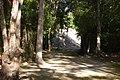 Petén Campechano, Calakmul, Campeche (22012547459).jpg