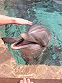 Petting the dolphins at Sea World Orlando.jpg