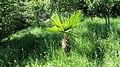 Piccola Palma - panoramio.jpg