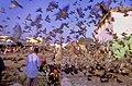 Pigeons, Djibouti - panoramio.jpg