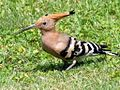 PikiWiki Israel 30362 Wildlife and Plants of Israel.jpg