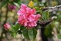Pink (45457490194).jpg